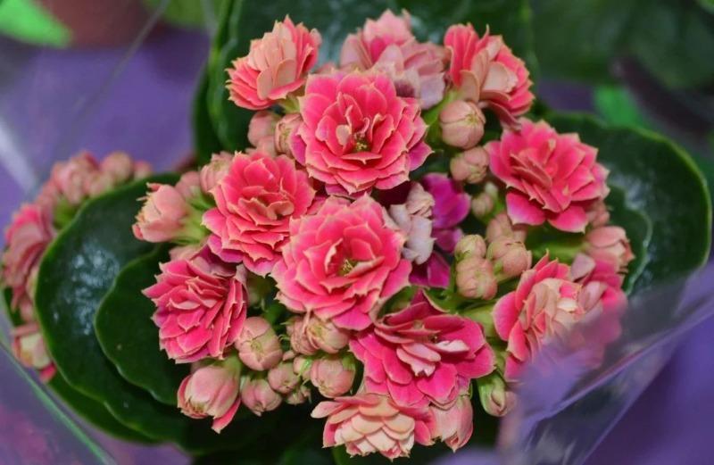 Невероятно: 7 комнатных растений, которые на самом деле цветут, а многие и не знали