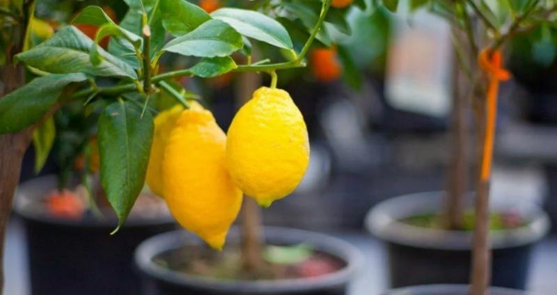 Что комнатные растения могут рассказать о своем хозяине