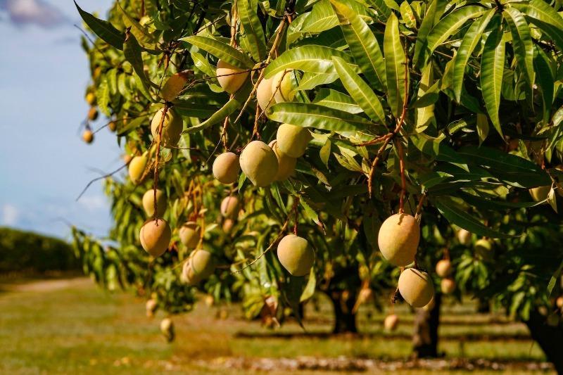 На дереве или в земле: как и где растут арахис, миндаль и еще 7 экзотических культур