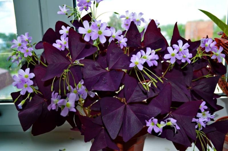 8 комнатных растений, цветение которых предвещает скорую беременность или любовь