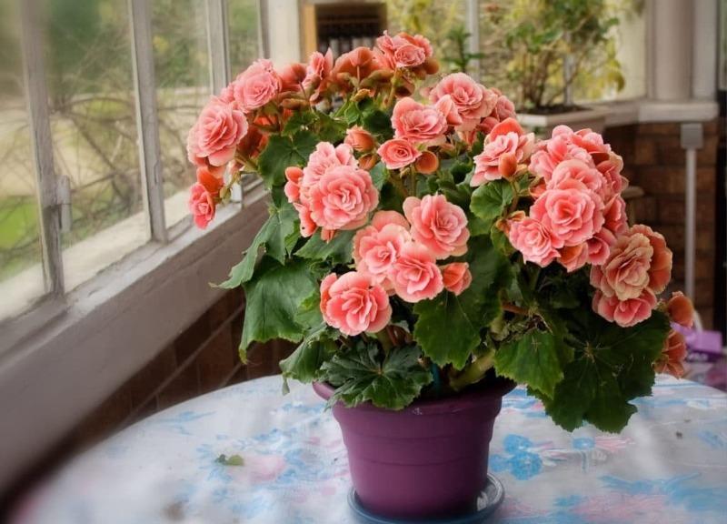 10 комнатных цветов, которые цветут и растут даже без солнечного света