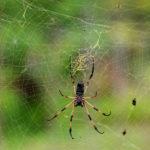 Как избавиться от пауков, поселившихся у вас на даче