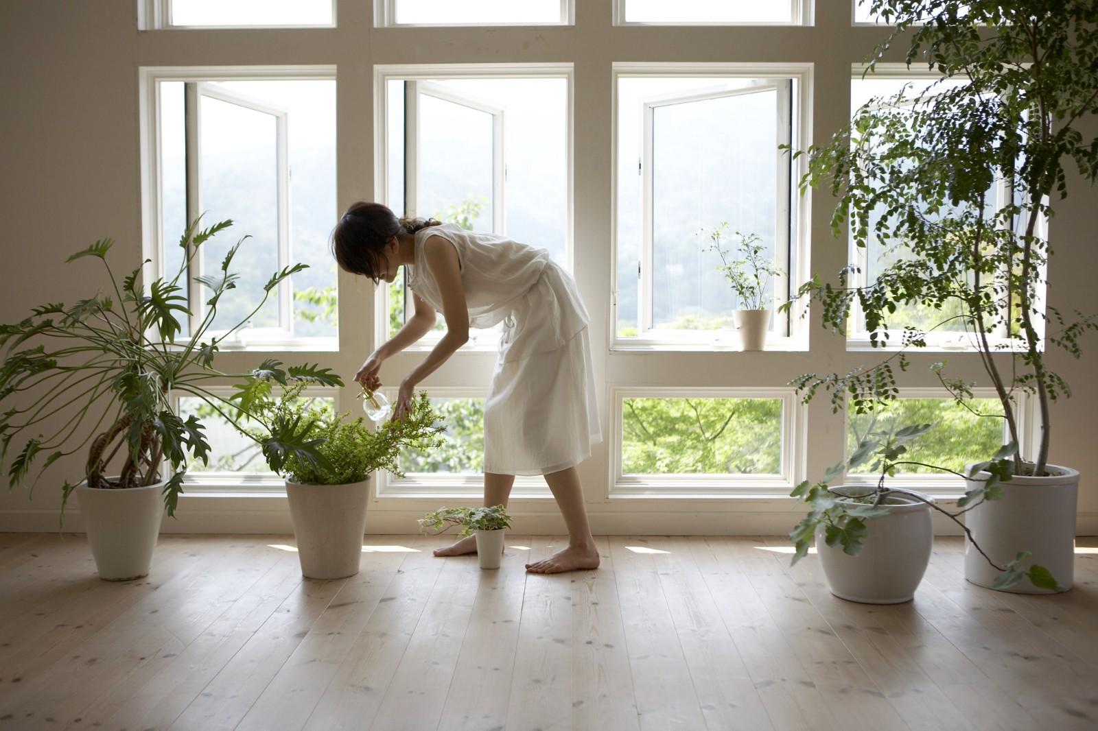 Профи, а не любители: 5 знаков Зодиака, в доме которых всегда живет много растений
