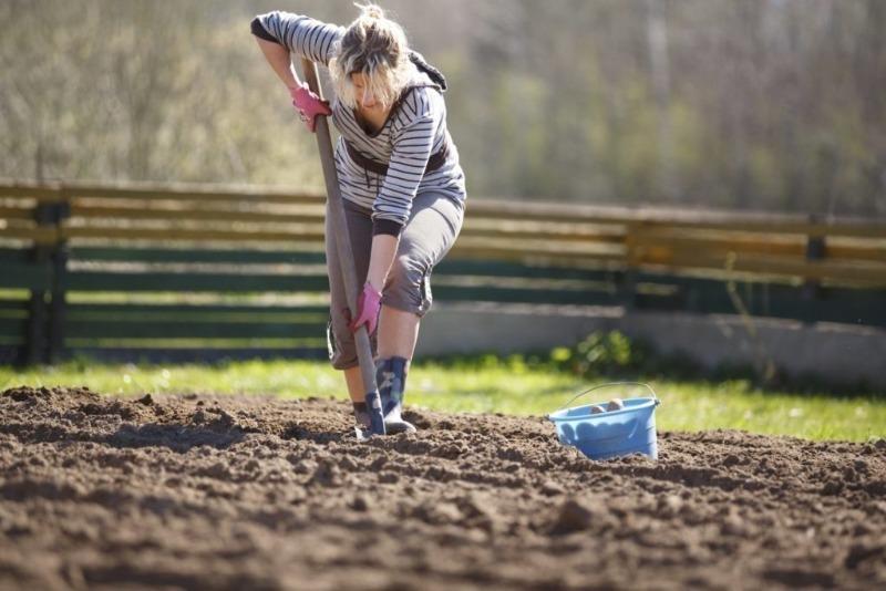 Никто не помогает на огороде, но «свеженького и натурального» просят все: сезон еще не начался, а родственники уже встали в очередь