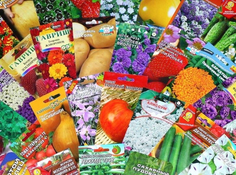 9 важных рекомендаций, которые помогут выбрать хорошие семена и сэкономить на их покупке