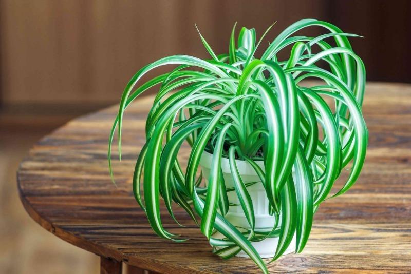 Комнатные растения, которые помогут выздороветь