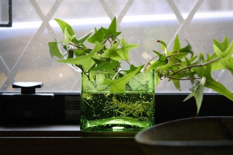 7 комнатных цветов, которые могут расти даже в стакане с водой