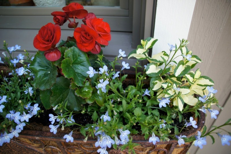 Что высадить в феврале, чтобы в мае радоваться богатому урожаю